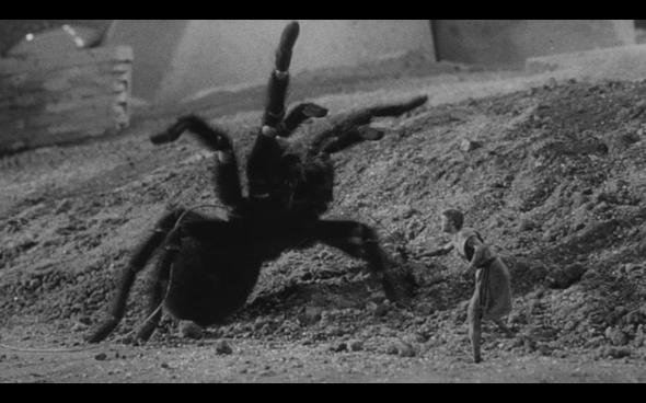 zz the iincredible shrinking man spider fight shrinkingman2