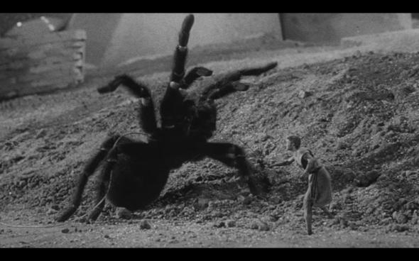 zz the iincredible shrinking man spider fight shrinkingman2