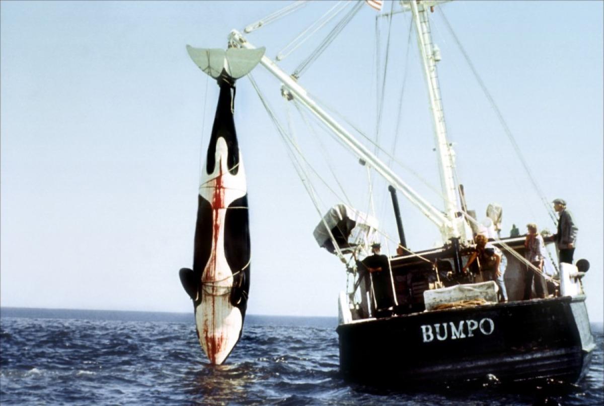 Cad  234  o Greenpeace quando se precisa deles Orca Bite