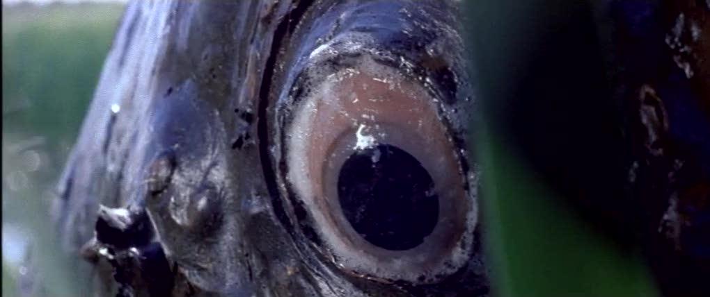 Olhar de peixe morto