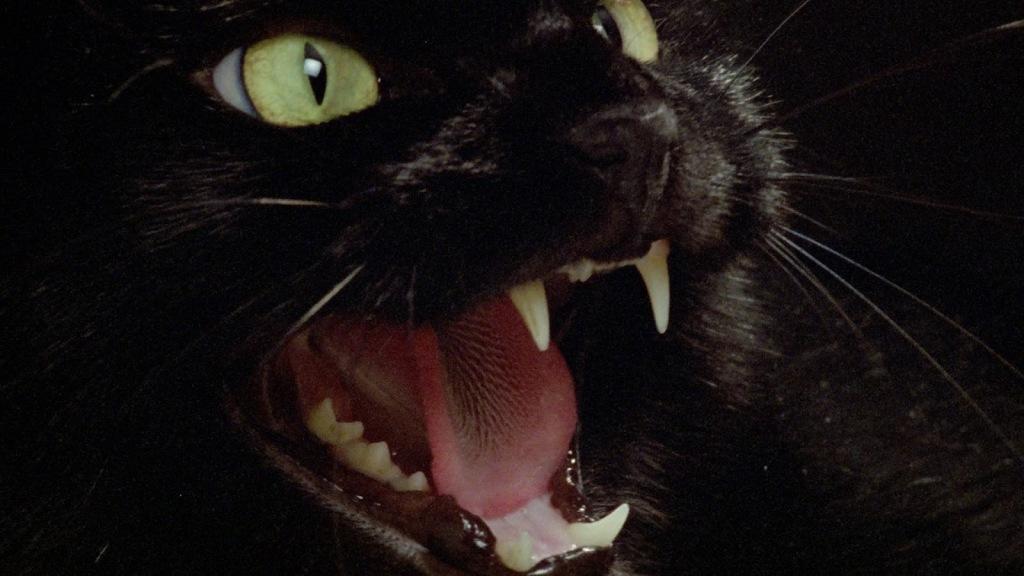 Um gato preto cruzou a estrada...