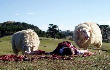 Black-sheep(1)-1-.jpg